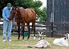 Eldaafer at Old Friends with his inseparable companions, the goats Google and Yahoo.