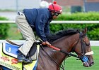 "Wicked Strong<br><a target=""blank"" href=""http://photos.bloodhorse.com/TripleCrown/2014-Triple-Crown/Kentucky-Derby-Workouts/i-V4KXVPj"">Order This Photo</a>"