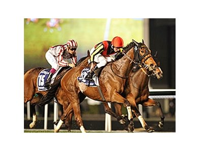 "Gentildonna fights for the win in the Dubai Sheema Classic.<br><a target=""blank"" href=""http://photos.bloodhorse.com/AtTheRaces-1/Dubai-2014/38085033_tQgx4h#!i=3148828014&k=GNnvhwQ"">Order This Photo</a>"