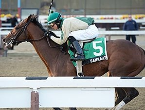Samraat, Uncle Sigh Work at Belmont
