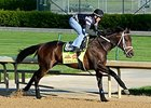 "General a Rod went five furlongs in 1:03 2/5 April 23.<br><a target=""blank"" href=""http://photos.bloodhorse.com/TripleCrown/2014-Triple-Crown/Kentucky-Derby-Workouts/i-2n3547T"">Order This Photo</a>"
