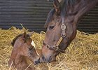 Danedream and her Frankel filly.