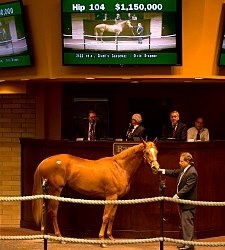 Giant's Causeway Colt Tops Barretts 2YO Sale