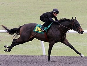 Expectations High For Obs 2 Year Old Sale Bloodhorse