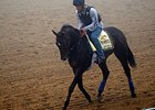 "Ria Antonia went to the track in the morning fog. <br><a target=""blank"" href=""http://photos.bloodhorse.com/TripleCrown/2014-Triple-Crown/Preakness-Stakes-139/i-vPfqcTh"">Order This Photo</a>"