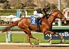 Seven Seek First Graded Score in Las Flores