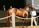 Lot 53, a Giant's Causeway filly, sold for 3.2 million rands ($292,368) on Jan. 23.