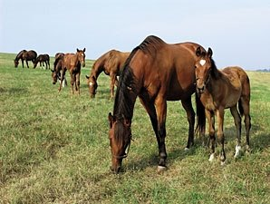 More Than $12.8 Million in KY Breeder Awards