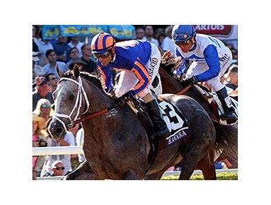 "Havana<br><a target=""blank"" href=""http://photos.bloodhorse.com/BreedersCup/2013-Breeders-Cup/Juvenile/33149927_s6DS8h#!i=2888276179&k=cDdd9gk"">Order This Photo</a>"