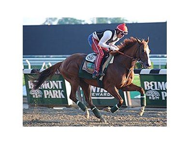 "California Chrome galloped at Belmont on May 25. <br><a target=""blank"" href=""http://photos.bloodhorse.com/TripleCrown/2014-Triple-Crown/Belmont-Stakes-146/i-GRDqJNb"">Order This Photo</a>"
