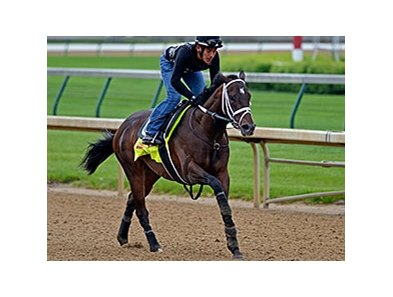 "Vicar's in Trouble is one of two Derby entries for the Ramseys.<br><a target=""blank"" href=""http://photos.bloodhorse.com/TripleCrown/2014-Triple-Crown/Kentucky-Derby-Workouts/i-kffjRrs"">Order This Photo</a>"