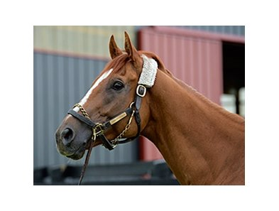 "Wise Dan<br><a target=""blank"" href=""http://photos.bloodhorse.com/OntheFarm/On-the-farm/i-k8zpq2v"">Order This Photo</a>"