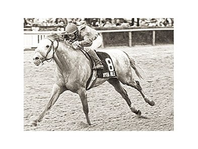 Rubiano, son of Ruby Slippers, was named champion sprinter of 1992.