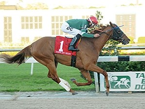 Tampa Bay Derby inner Ring Weekend returns to the turf in the Sir Cat.
