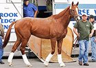 California Chrome arrives at Parx Racing on September 16.