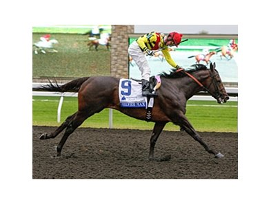 Silver Max won the 2013 Shadwell Turf Mile.