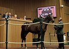 Hip 105, a filly by Bernardini, sold for $1.2 million at the Keeneland September Sale.