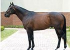 Street Cry Gains 100th Black-Type Winner