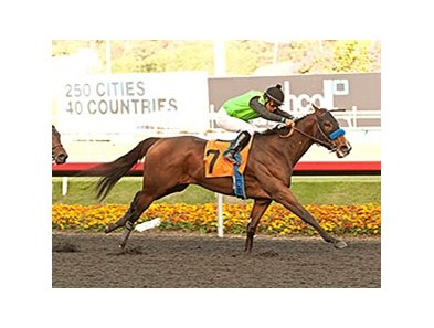 Streaming won the Starlet Dec. 7 at Hollywood Park.