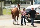 California Chrome Leaves for California