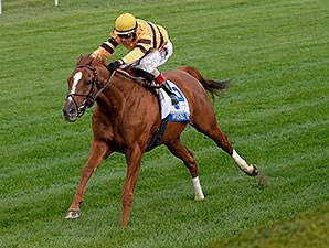 Wise Dan flies home to win the Shadwell Turf Mile.