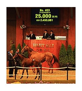 Hip 403 by Deep Impact was the Japan Racing Horse Association foal sale topper.