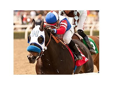 Halo Dolly won the 2014 Dream of Summer Stakes.