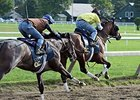 Tonalist All Set for Travers, Clement Says