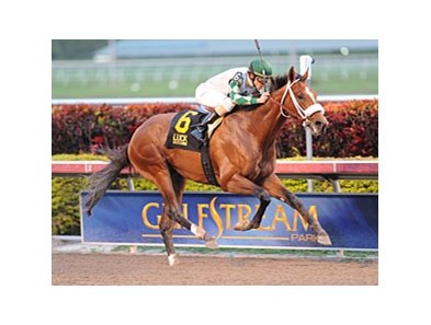 "Mucho Macho Man won the Sunshine Millions Classic on Jan. 28.<br><a target=""blank"" href=""http://www.bloodhorse.com/horse-racing/photo-store?ref=http%3A%2F%2Fpictopia.com%2Fperl%2Fgal%3Fprovider_id%3D368%26ptp_photo_id%3D9805550%26ref%3Dstory"">Order This Photo</a>"