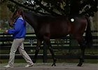 Fasig-Tipton October Yearling Sale Wrap - Day 1