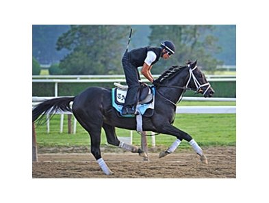 "Revolutionary is one of five Belmont contenders trained by Todd Pletcher.<br><a target=""blank"" href=""http://photos.bloodhorse.com/TripleCrown/2013-Triple-Crown/Belmont-Stakes-145/29744699_jpqpwR#!i=2559159961&k=h3g8VjZ"">Order This Photo</a>"