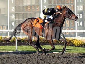 Dan the Tin Man won the 2014 Tom Ridge Stakes.