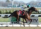 "Samraat is undefeated in three starts.<br><a target=""blank"" href=""http://photos.bloodhorse.com/AtTheRaces-1/at-the-races-2013/27257665_QgCqdh#!i=2977365148&k=LFw9p6M"">Order This Photo</a>"