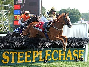 No Dominant Horse in Steeplechase Category
