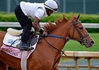 "Rosalind <br><a target=""blank"" href=""http://photos.bloodhorse.com/TripleCrown/2014-Triple-Crown/Kentucky-Derby-Workouts/i-J853XGC"">Order This Photo</a>"