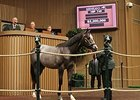 Hip 749, a half brother to Breeders' Cup Juvenile (gr. I) winner New Year's Day, sold for $2.2 million on Sept. 11.