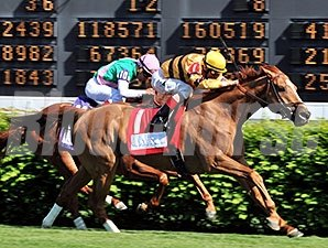 Wise Dan won the 2014 Woodford Reserve Turf Classic.