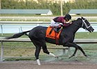 Cairo Prince Works Bullet at Palm Meadows