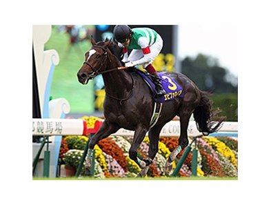 Epiphaneia wins the Kikua Sho (Japanese St. Leger).