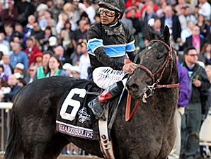 Shared Belief after the Breeders' Cup Classic Nov. 1, 2014.