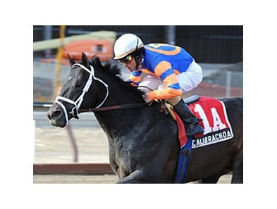 "Calibrachoa and Ramon Dominguez take the Tom Fool at Aqueduct. <br><a target=""blank"" href=""http://www.bloodhorse.com/horse-racing/photo-store?ref=http%3A%2F%2Fpictopia.com%2Fperl%2Fgal%3Fprovider_id%3D368%26ptp_photo_id%3D9432628%26ref%3Dstory"">Order This Photo</a>"