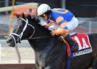 Graded Winner Calibrachoa Retired