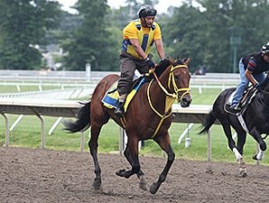 Wildcat Red gallops at Monmouth Park on July 24, 2014.