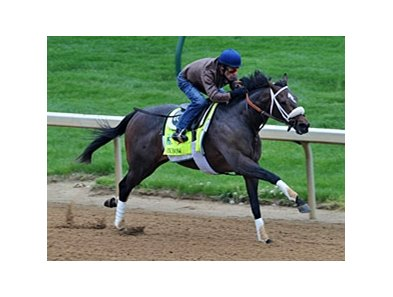 Oxbow, in his pre-Derby workout.