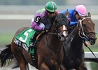Ami's Holiday won the 2013 Grey Stakes.