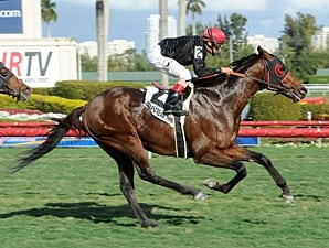 Point of Entry wins the 2013 Gulfstream Park Turf Handicap.