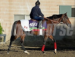 Anodin - Breeders' Cup 2014