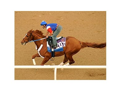 Curlin works an easy half-mile Feb 23 in Dubai.