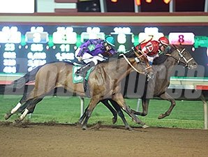 Hero On Saturday wins the 2014 Careless Navigator Overnight Stakes.