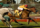 Tuscan Evening Takes Star Turn in Gamely